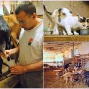 Návštěva kozí farmy – díl druhý